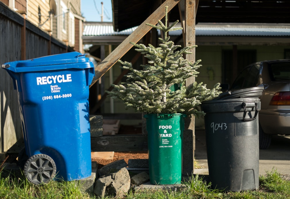 A Quick Hit: Christmas Tree Recycling - A Quick Hit: Christmas Tree Recycling : Stephen Brashear Photography